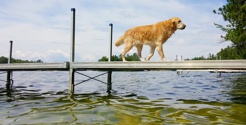 Tessie on the dock at Moultonborough, Lake Winnipesaukee, NH