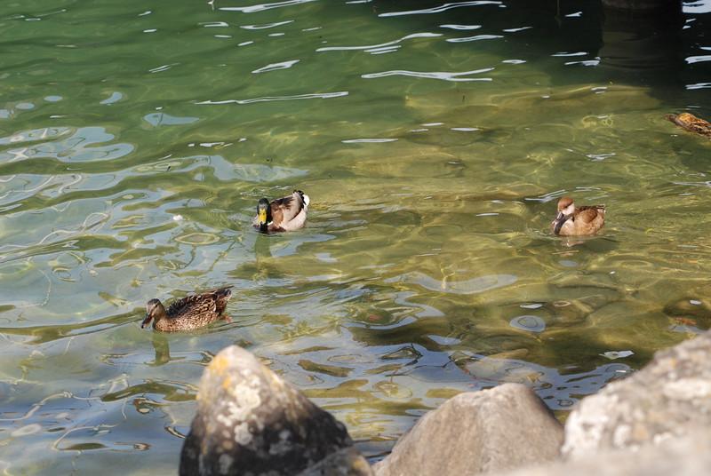 Lake Zurich_2496716683_o.jpg