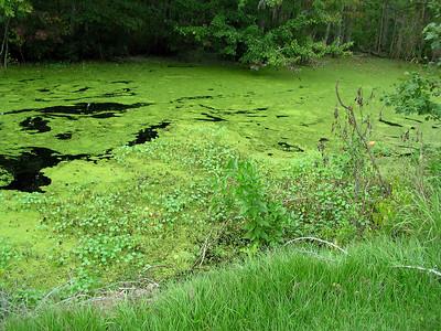 lake waccamaw nc 074