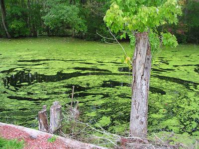 lake waccamaw nc 076