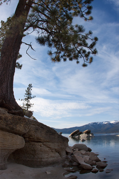 Lone Tree at Sand Harbor