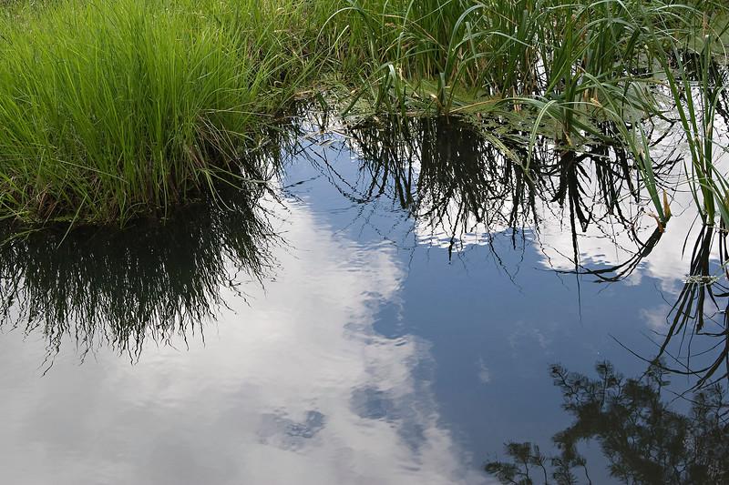 Tahoe Wetlands