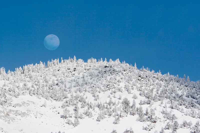 Frosty Moonrise