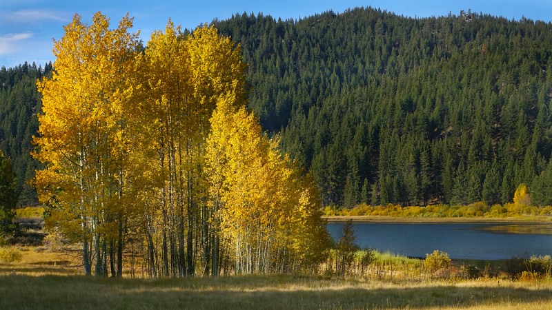 Aspen Grove at Spooner Lake