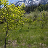 Mt. Tallac  in Spring