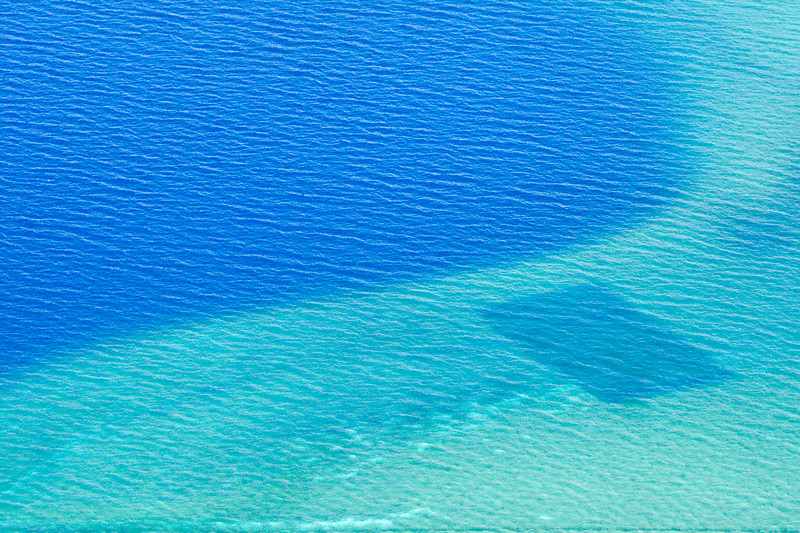 Aerial view of Asian clams, at Marla Bay on Lake Tahoe, shown here at 15 feet below the surface. The dark rectangular is an underwater mat used to control the spreading clam population.