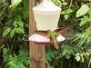 10-J-Hummingbird-241