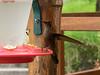 10-J-Hummingbird-160