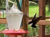 10-J-Hummingbird-151