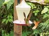 10-J-Hummingbird-271