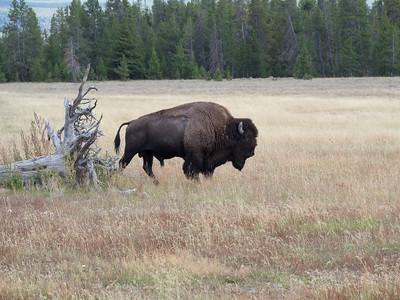 Yellowstone-014