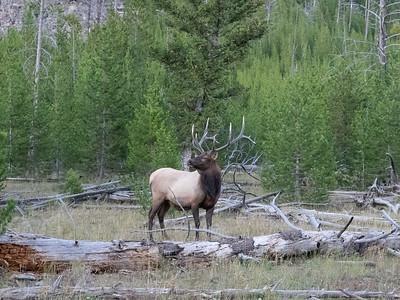 Yellowstone-170