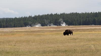 Yellowstone-021