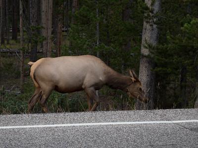 Yellowstone-126
