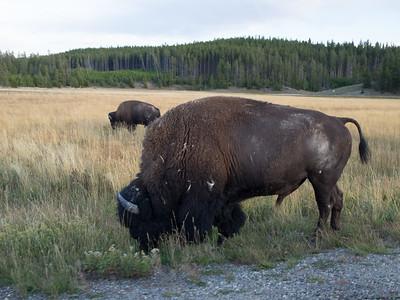 Yellowstone-102