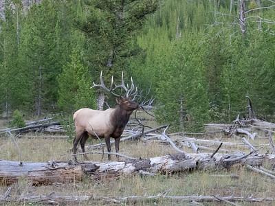 Yellowstone-174