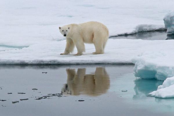 Land of the Ice Bears2017