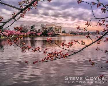Early morning looking across one of the reflecting pools at Jefferson Memorial with the cherry blossoms beginning to bloom.