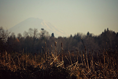 Evening Light and Mt. Rainier Seattle, 2013