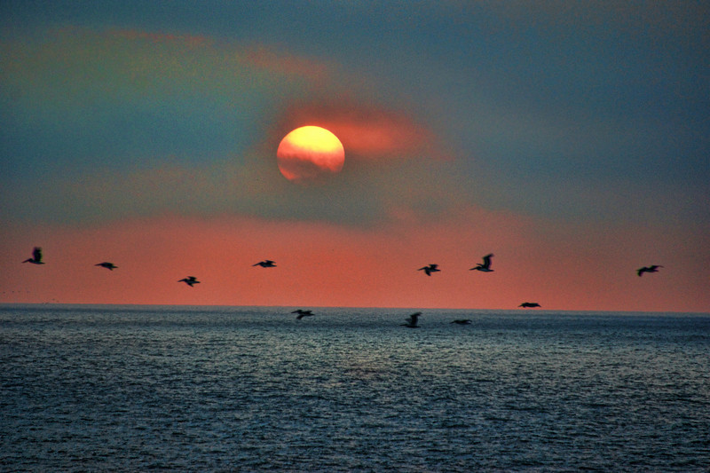 Pelican Sunrise.  Nags Head, North Carolina