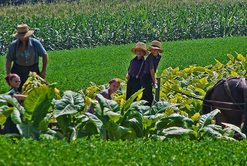 Amish Family . Lancaster, Pennsylvania