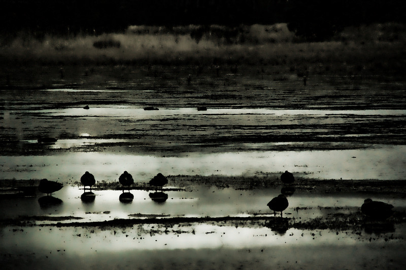 Nightfall Birds .  Assateague Island,  Maryland