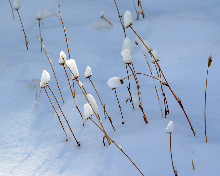 Snow-capped grasses along the Tahoe Rim Trail.