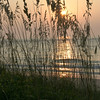 Sea Oats, Sullivans Island, South Carolina