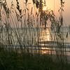 Sea Oats, Sullivans Island, South Carolina