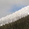 Frost Line, Sierra Nevada Mountains, Nevada
