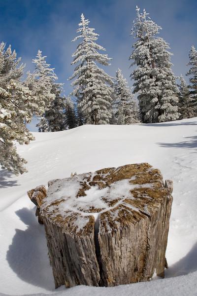 Chickadee Pines