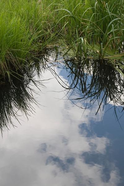 Wetlands at Sagehen Creek, near Truckee, California