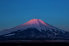 Sun Kissed Fuji  ©2017  Janelle Orth