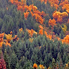 Fall Colors Along Rt 50