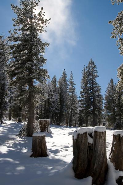 Light snowfall on the Tahoe Rim Trail.