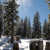 Light snowfall on the Tahoe Rim Trail.