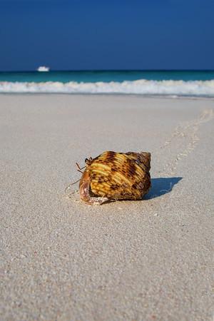Hermit Crab ©2014 Janelle Orth