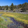 Sierra Meadow