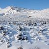 Snow Covered Ridges