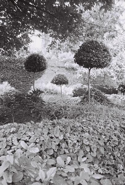 Trees at Alahambra, Granada, Spain 2003