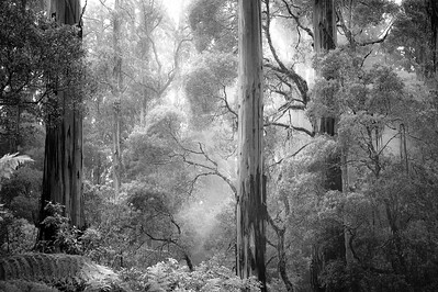 Magic forest Australia