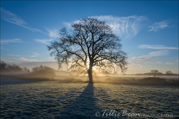 Frosty Morning - Hampshire