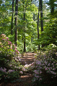 Trail in the Norfolk Botanical Gardens