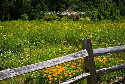 Wildflowers growing at Norfolk's Botanical Gardens