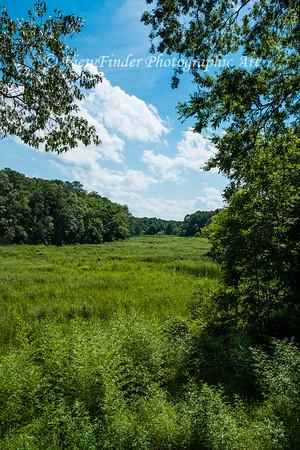 Summer in the Marsh