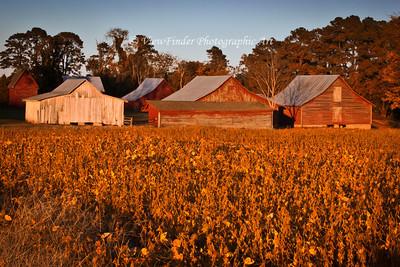 Fall Colors at Windsor Castle Farm in Smithfield, VA