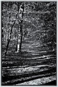 The Path Ahead