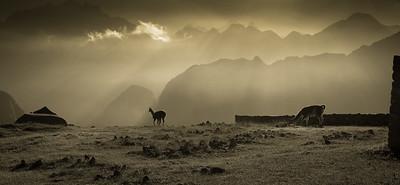 Dawn Machu Picchu