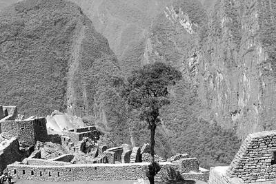Tree Machu Picchu