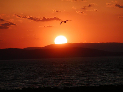 Burlington Vermont Sunset with Seagull